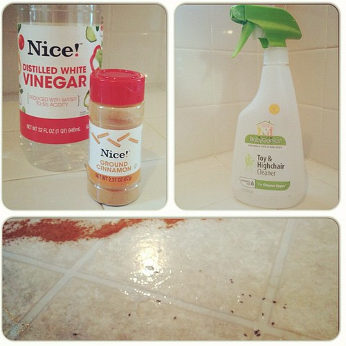"Day 4 of the Ant Invasion. Casualties high (finally) thanks to BabyGanics ""Naturally safe & non-toxic Toy & Highchair Cleaner."
