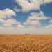 Trigal - wheat field by Dircinha -