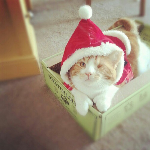 He already had the mittens. #CatsWithThumbs #OneEyedCats #CatsDressedAsSanta