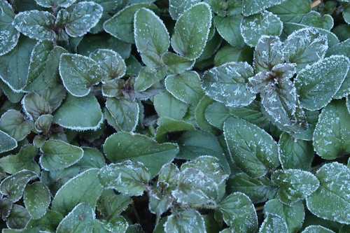 frost on the crunchy ground