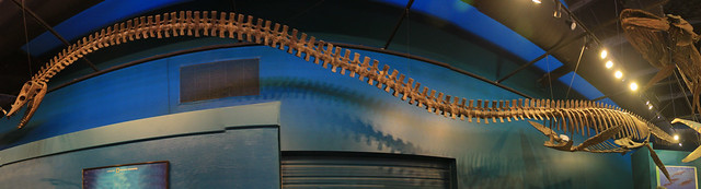Elasmosaurus platyurus at the Rocky Mountain Dinosaur Resource Center, Woodland Park, CO