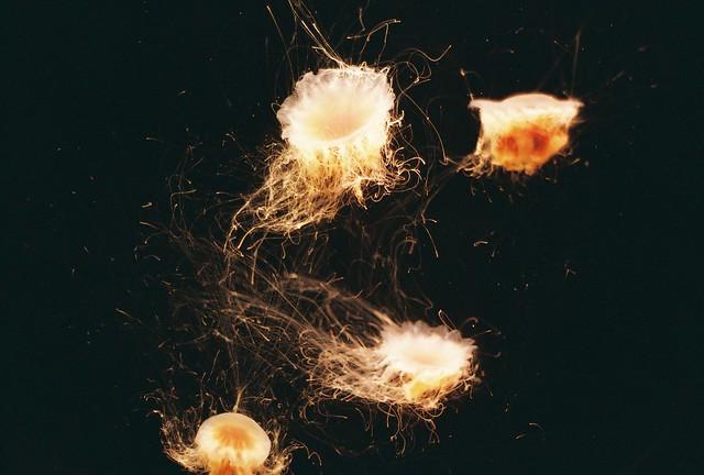 jelly + fish = jellyfish