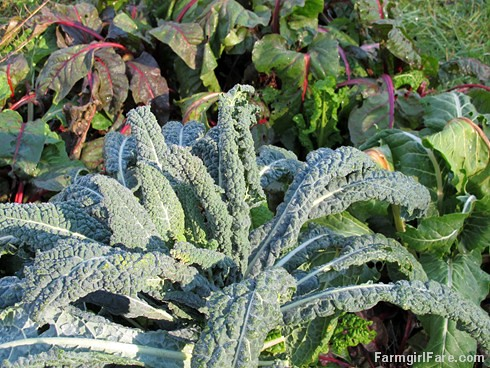 (17) Lacinato kale (cavalo nero) direct seeded last fall and Swiss chard direct seeded last spring are still thriving in the kitchen garden - FarmgirlFare.com