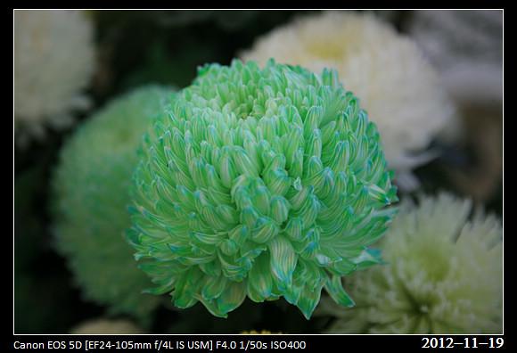 20121119_Flower32