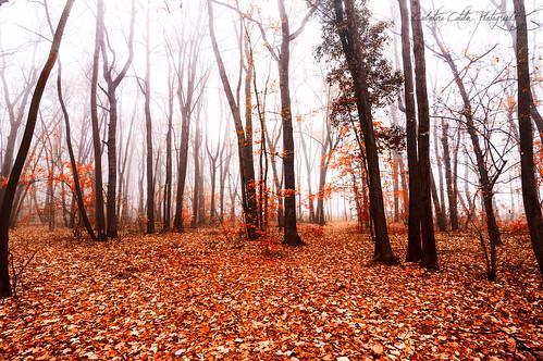 red orange mist nature fog forest leaflesstrees leavesontheground autumnseason nikond90 tokina1116