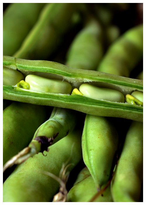 broad beans© by Haalo