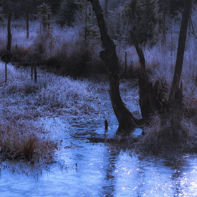 Sur le ruisseau... la glace me regarde... j'ai les yeux bleus...!!!