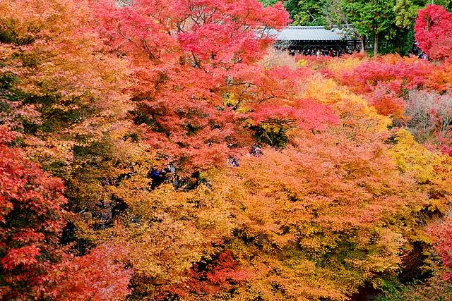 晩秋の紅葉渓谷