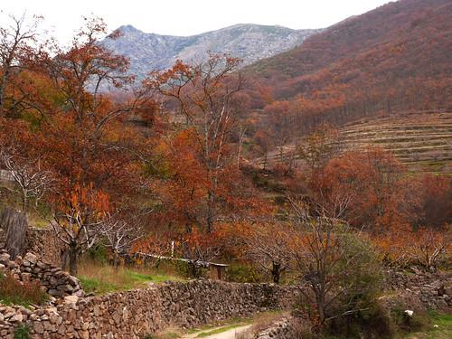 Fotografía del Otoño en el Valle del Jerte