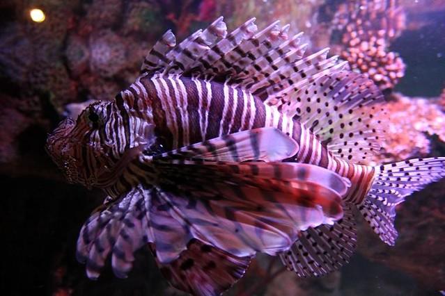 close up of fish in aquarium