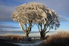 Great Treverran - 2012 Winter Photo Competition