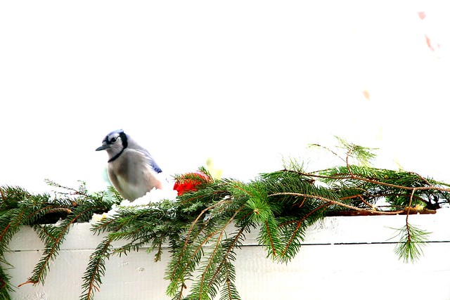 lane family pics~ winter wonder 494