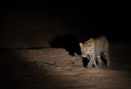 Night Hunter by Max Waugh Photography