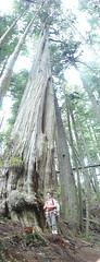 Big tree / little Robyn