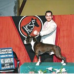 Donner New Argentinean Champion