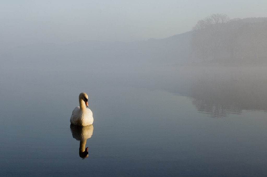 Swan of Esthwaite by Marks Maksimovs, Lake District, UK