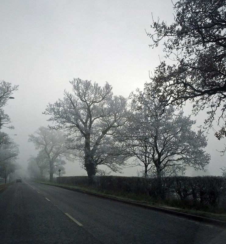 foggy_morning