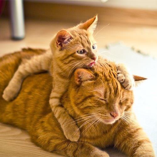 mom kitty and kitty kitty