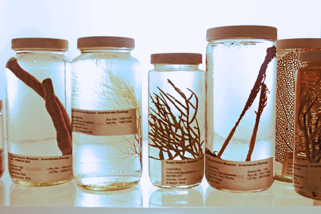 Jars with Specimens