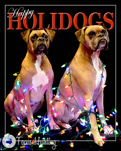 Happy Holidogs 2010