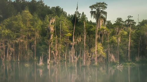 2016 lauraswalkerstatepark waycross georgia unitedstates us cyprus trees spanish moss swamp water mist fog canonef24105mmf4lisusm