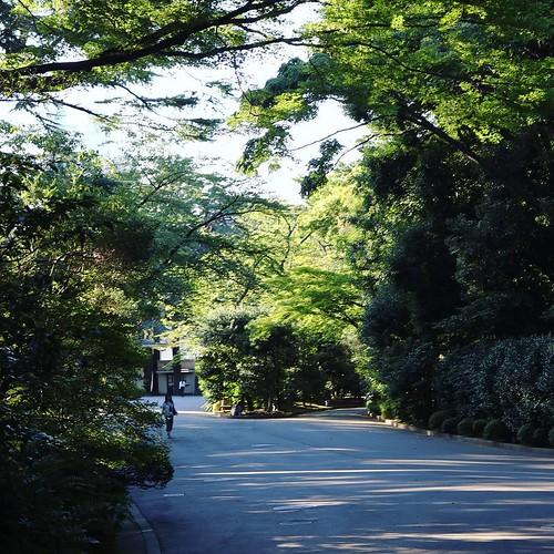目黒にある自然 #東京都庭園美術館
