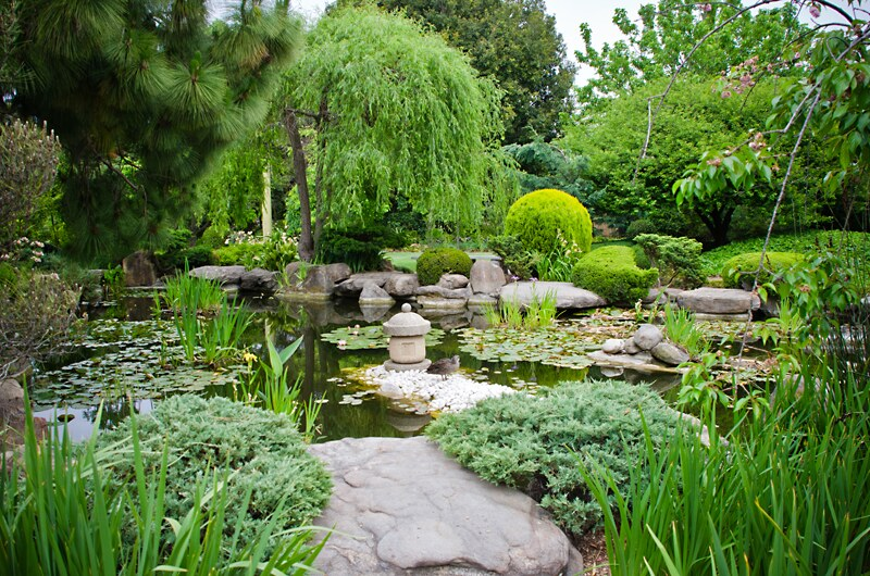 Review adelaide himeji garden tokyoki for Landscape gardeners adelaide