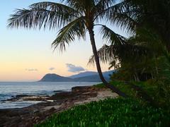 beach_luau