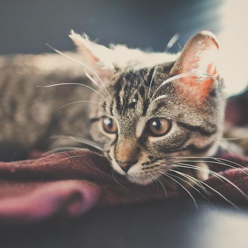 [フリー画像素材] 動物 1, 猫・ネコ ID:201211141000