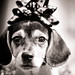 Christmas Beagle, Plate 3