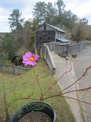 43. Foliage and the Mill