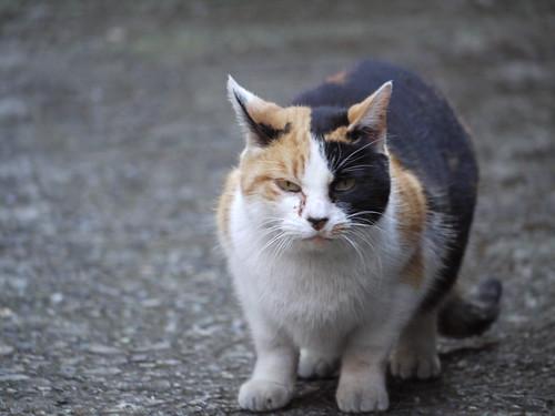 猫@???区