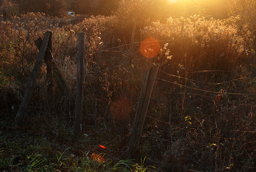 autumn light sunset vermont grasses
