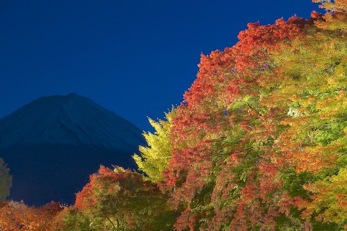 lighting autumn sony japanesemaple mountfuji 日本 紅葉 tamron mtfuji amount 河口湖 山梨 lakekawaguchi カエデ ライトアップ a001 dslra900 α900 spaf70200mmf28di 梨川 momijikairou