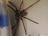 Bathroom Huntsman 001