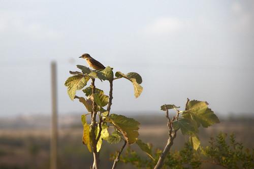 Ma premiere photo d oiseau aventure reflex for J ai ouvert ma fenetre
