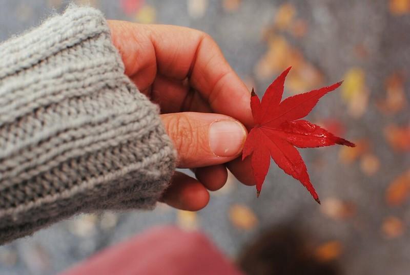 november 19 (habit)