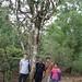 Jonathan, M. Wang, Jasmin et une cueilleuse devant un théier de 800 ans à Banzhang, Yunnan