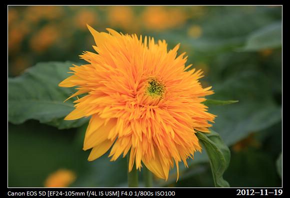 20121119_Flower51