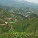 Jardin certifié biologique du Wei Shan Mao Jian
