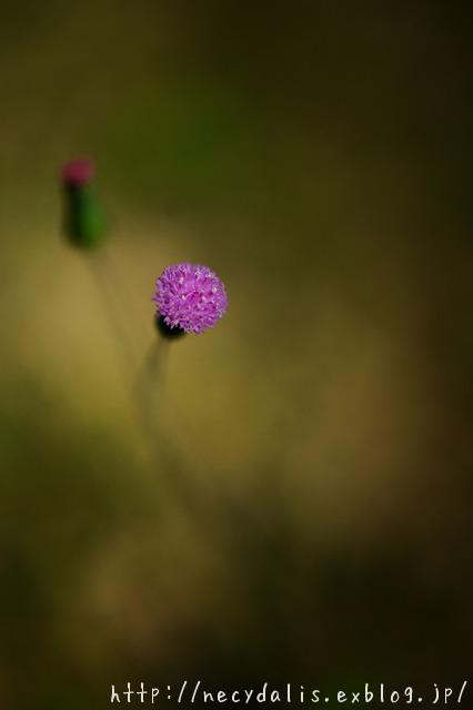 Spot...