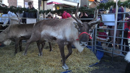 Reindeer at the market