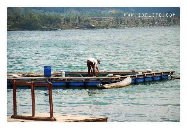 ikan segar dari danau batur