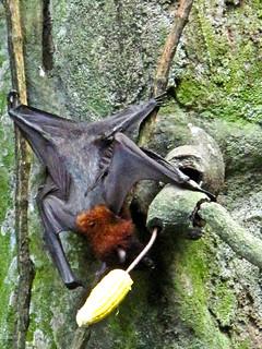 IMG_1626 Bat