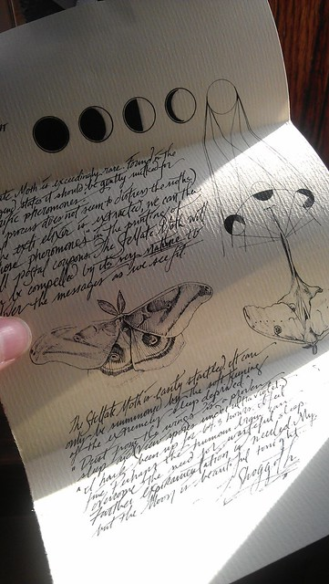 Dr. Shoggoth's Field Notes on the Stellate Moth