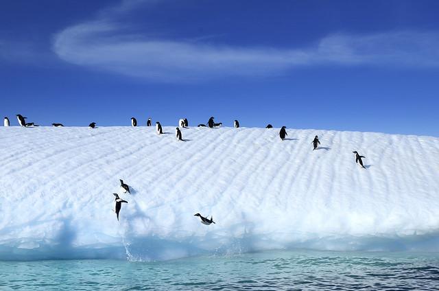 Penguins leaping on Iceberg, Antarctica