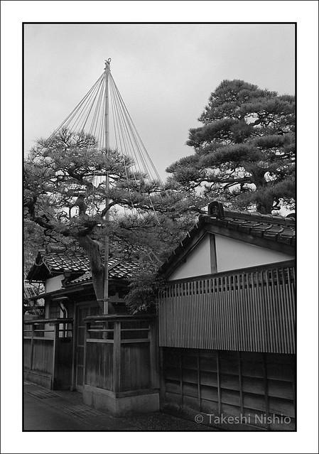 雪吊り / Yukitsuri, Snow protection ropes