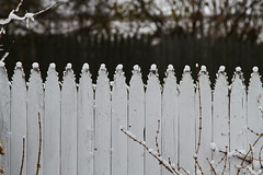 Snow on the fence points