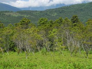 農委會活化休耕農地計畫推廣作物包括短期經濟林,不但無助糧食安全,甚至產生排擠作用。