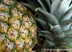 Pineapple Crop